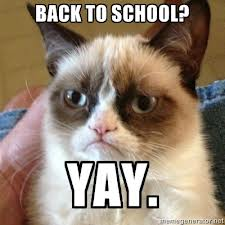 grumpy-cat-school